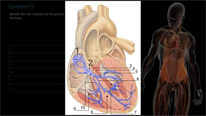 Get Human Anatomy and Physiology Quiz - Microsoft Store my-MM