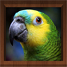Bird Calls - Free : 4500+ Bird Sounds, Bird Songs, Bird Identification & Bird Guide