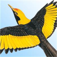 Buy Australian Birds - Microsoft Store en-AU