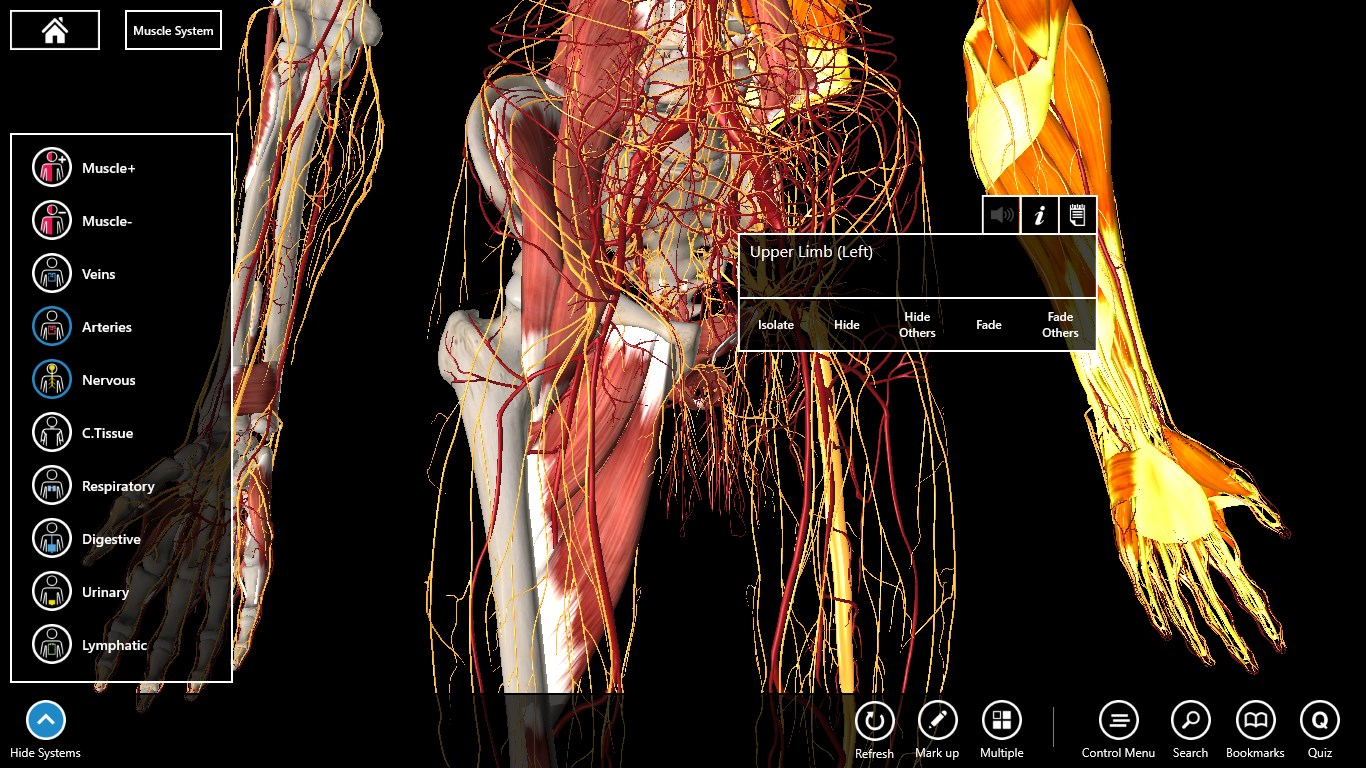 Essential Anatomy 3 for Organizations for Windows 10